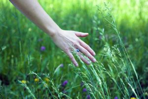 hand-in-grass1